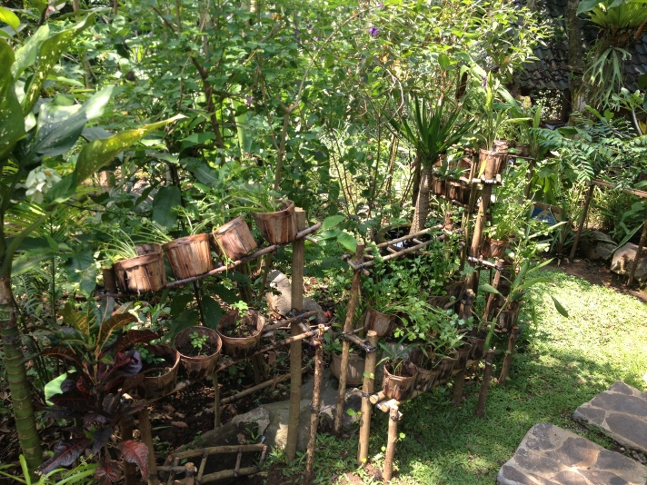 Herbs growing at Cantika Zest